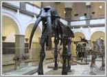 paleontologicheskiy-muzey-ico